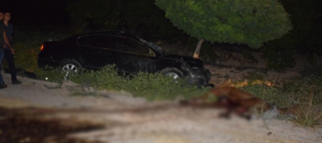 Ortalık savaş alanına döndü: 6 kişi yaralandı, yarış tayları telef oldu!