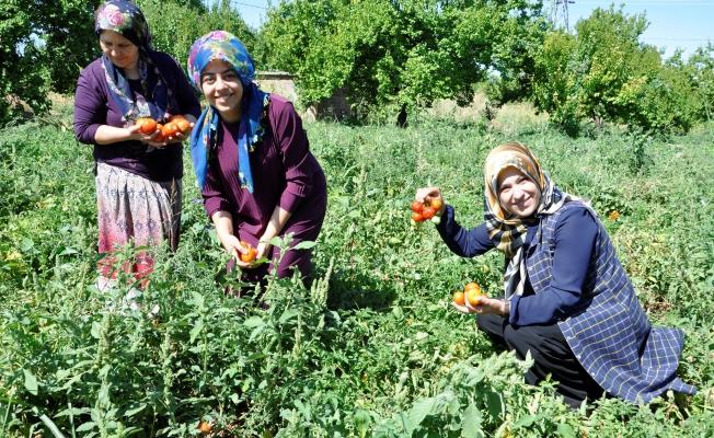 Kadın girişimcilerden kış hazırlığı için hummalı çalışma