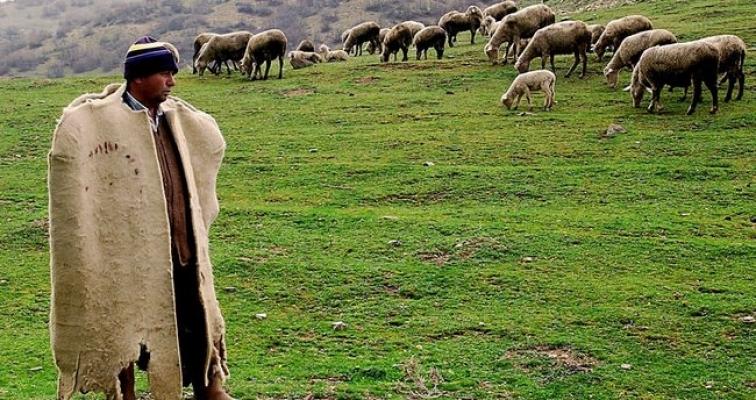 Türkiye, Afganistan'dan 150 bin çoban ithal edecek!