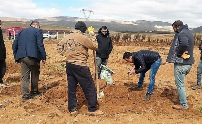 Yazıhan'da Trabzon Hurması Bahçesi kuruluyor