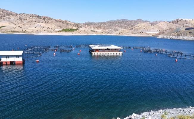 Denizi olmayan Malatya'dan 11 ülkeye balık ihracatı!