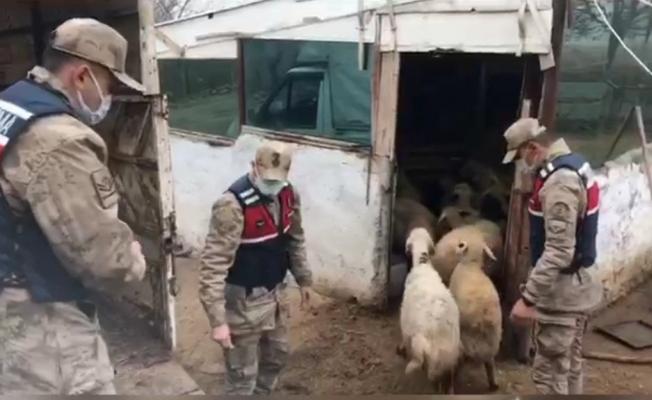 18 hayvanı çalındı, jandarma şüphelileri yakaladı