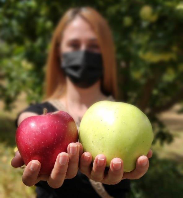 Doğanşehir elmasının hasadı başladı! Çiftçiler soğuk hava deposu istiyor!