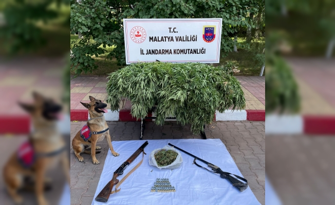 Malatya'da kenevir operasyonu! Çok sayıda uyuşturucu madde ele geçti!
