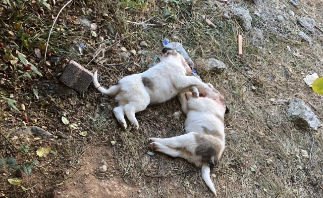 Böyle vahşet görülmedi! Köpekleri öldürüp parçaladılar!