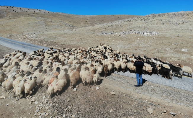 Çoban bile çobana kız vermeyince, kırsaldaki gençler başka işlere yöneliyor