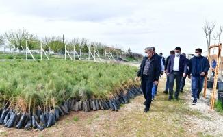 Çınar, Tepeköy fidanlık alanında ki çalışmaları inceledi