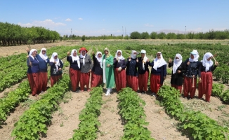 Battalgazi'nin gönüllü kadınları, ilk hasatlarını topladı