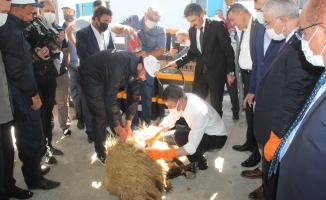 Malatya Valisi Aydın Baruş, koyun kırktı