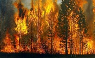 Türkiye'de son 2 yılda, 50 yılda gerçekleşen yangınlardan daha fazla yangın çıktı