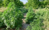 Malatya'da uyuşturucu operasyonu: 19 gözaltı