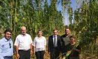 Malatya'da ilk kenevir hasadı başladı