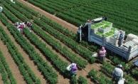 Doğanşehir'de sebze üretimi arttırılacak