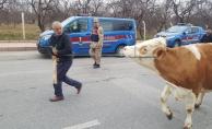 Hayvan hırsızlığı, 258 saatlik kamera görüntüsü ile çözüldü