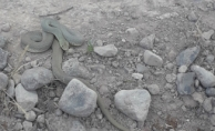Malatya'da yılan uyarısı! Vatandaşlar tedirgin!...