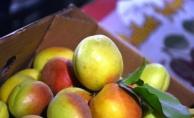 Hasadı başladı, yaş kayısı en pahalı meyve
