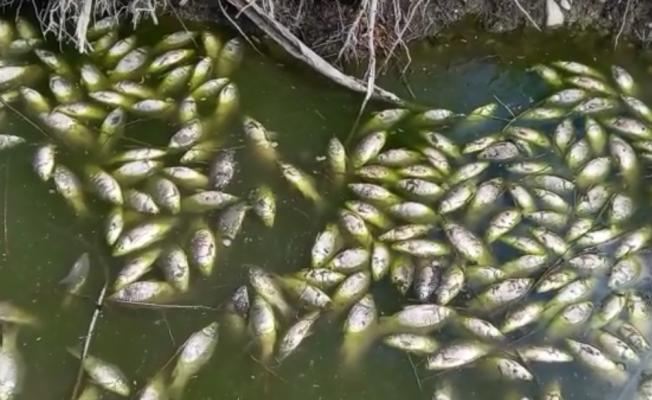 Baraj kapakları kapatılınca çaydaki balıklar telef oldu