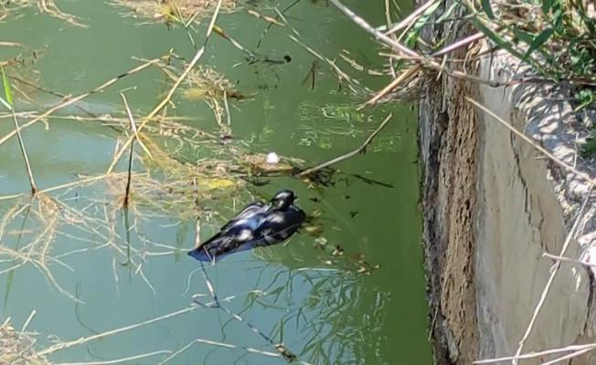 Sulama havuzuna düşen güvercine hayat kurtaran müdahale