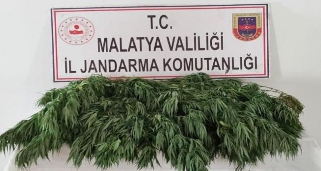 Jandarma, kenevir yetiştiricilerine göz açtırmıyor