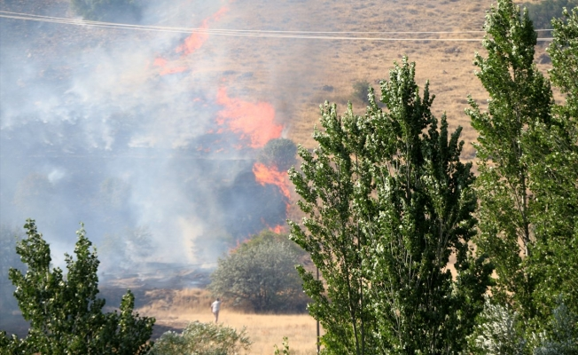 Yangında 70 kayısı ağacı zarar gördü