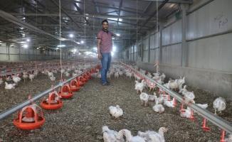 Akçadağ'da binlerce tavuk telef oldu