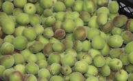 Kayısı kenti Malatya'da Mut kayısısı satılıyor